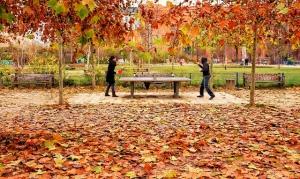 autumn ping pong